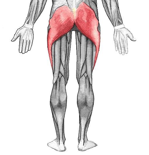 عضله dorsogluteal چگونه مورد استفاده قرار می گیرد؟
